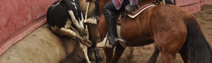 salto_rodeo_AL_04