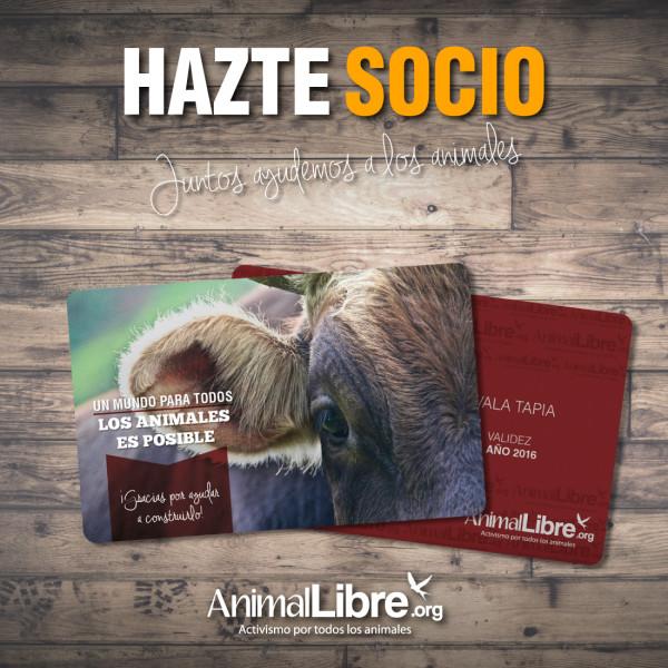 socio_pub (3)