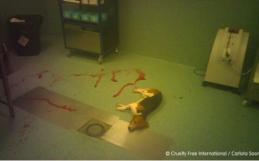 Revelan horrible maltrato animal en un laboratorio de España