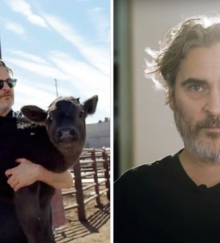 """Joaquin Phoenix comparte emotiva historia sobre el rescate de vacas desde una """"fábrica de muerte"""""""